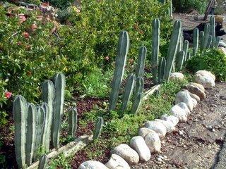 Sabra Cactus Hexagram