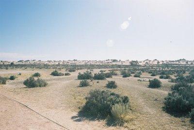 Freaky landscape