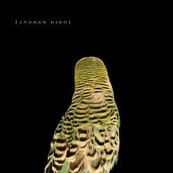 Andrew Bird -- Armchair Apocrypha