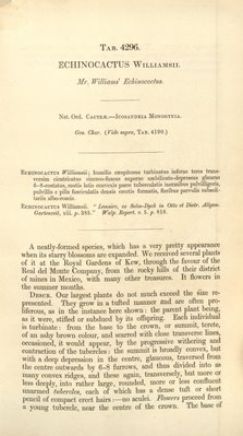 Curtis's Botanical Magazine – plate 4296, Lophophora williamsii, Description p1