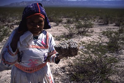 Huichol woman holding large peyote