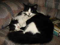 cats - Randy and Oliver