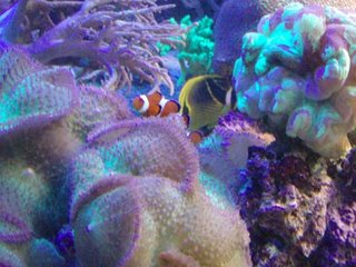 Death To Nemo!