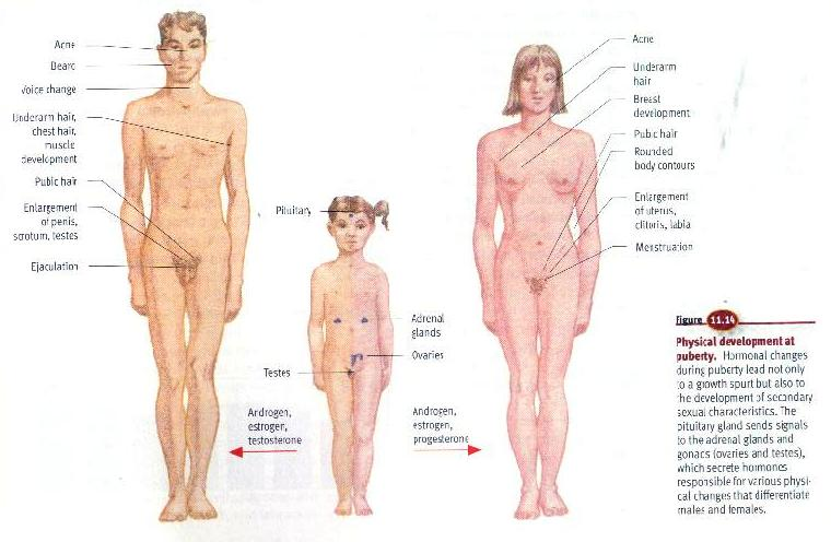 puberty_boy_and_girl.jpg.