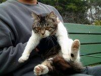 名城公園の野良猫