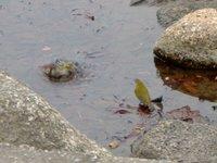 水浴び中のメジロ