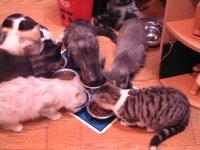 猫カフェお食事中