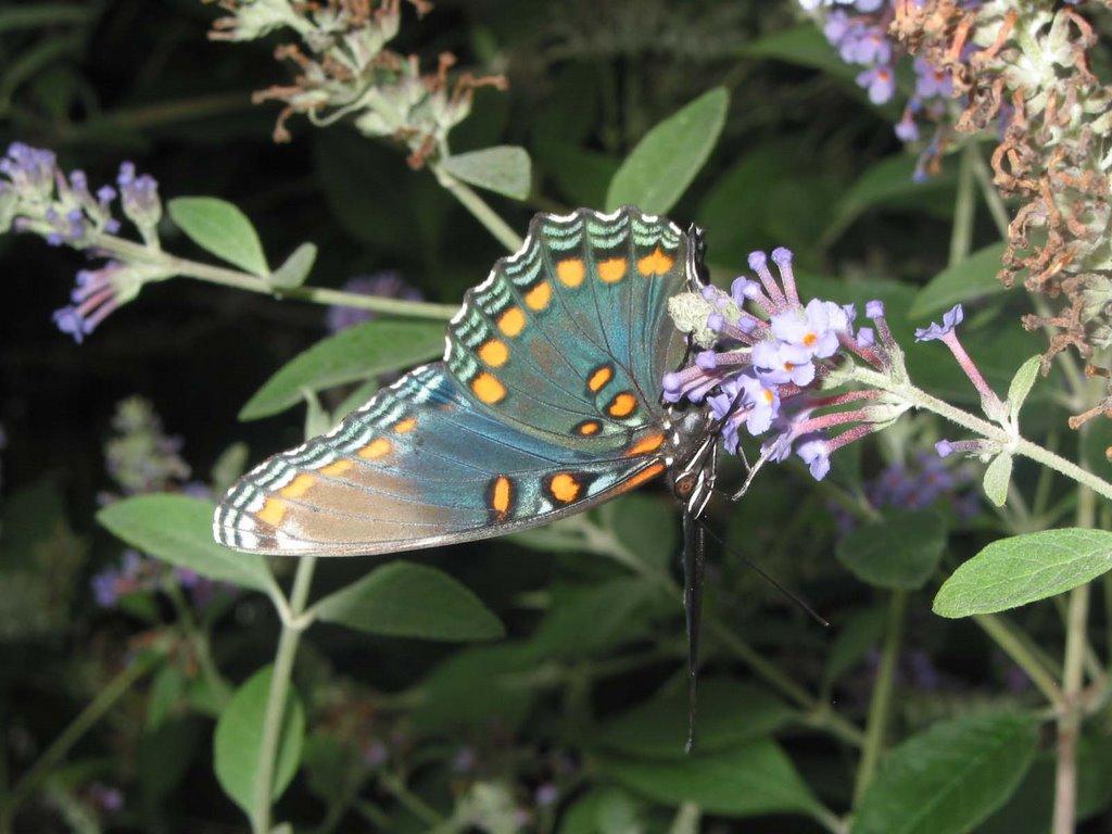 Creating A Butterfly Garden. U201c