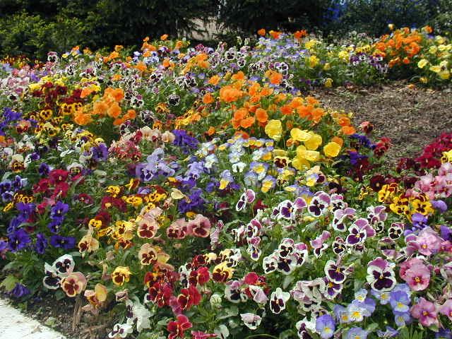 the flower arranging expert dr dg hessayon Click here click here click here click here click here the flower arranging expert dr dg hessayon dg hessayon | the flower expert – flowers encyclopediadg.