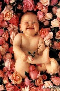 Roses Cómo ser feliz   Desiderata