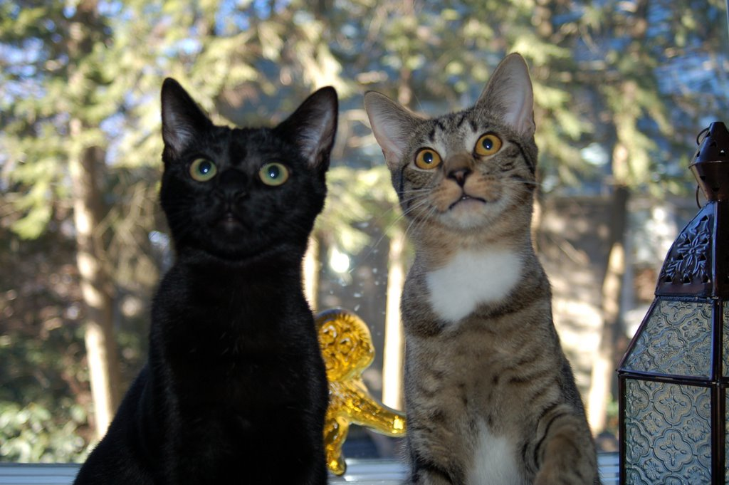 Chen & Ollie
