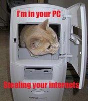 http://photos1.blogger.com/x/blogger/2783/325/200/173926/seehere.blogspot.com%20cats%20(56).jpg
