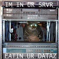 http://photos1.blogger.com/x/blogger/2783/325/200/939162/seehere.blogspot.com%20cats%20(63).jpg