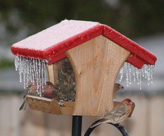 frosty feeder