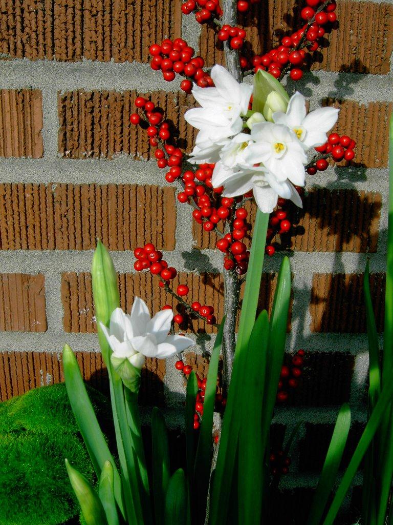 Holiday Specials Juniper Flowers