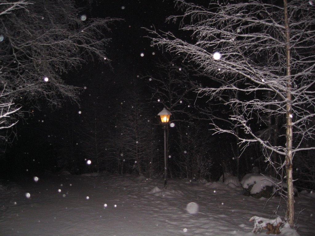 A Snowy Evening Winter Walk Wilderness Portraits By Lp Aiello