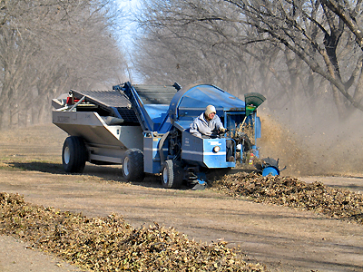 Pecan Sweeper in Action