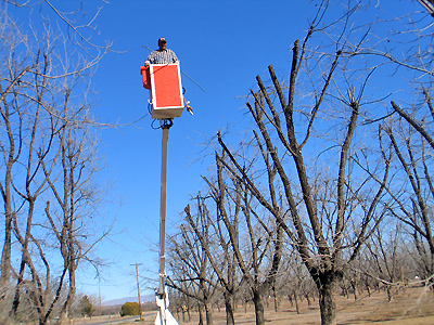 Pecan Pruning - Motorized Arm
