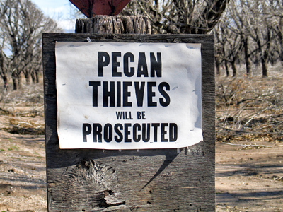 Pecan Thieves Will Be Prosecuted