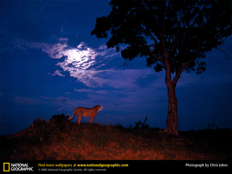 National Geographic Pictures | Birds, Scenery, Etc