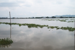 Guayaquil River