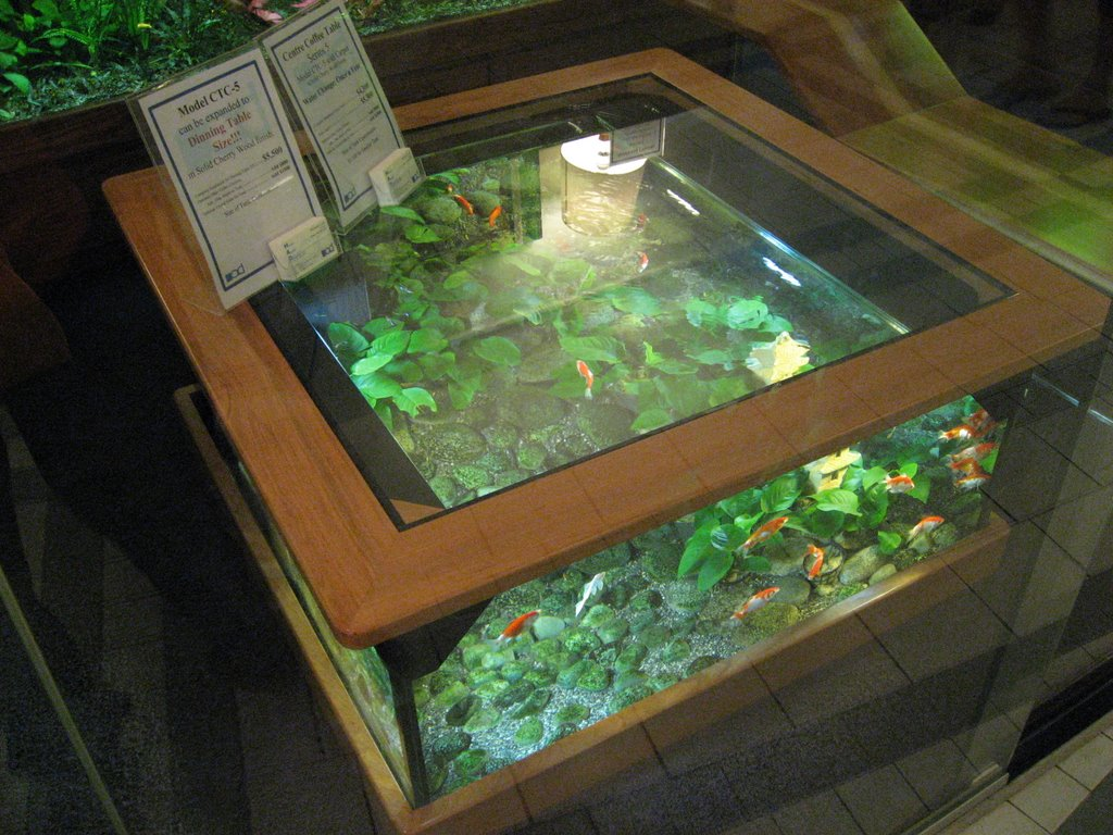 Coffee Table cum Aquarium What the Pets