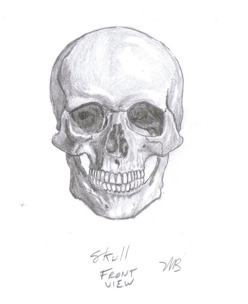atlas of human anatomy stephen rogers peck pdf
