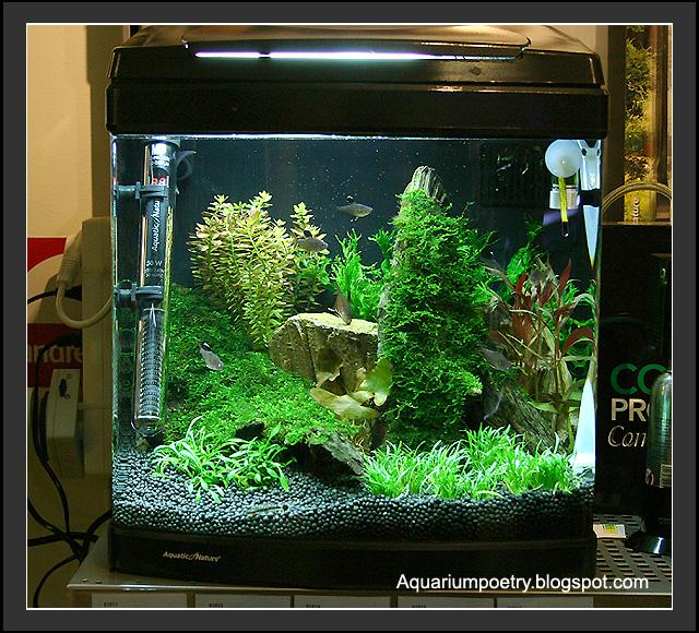 My aquarium scapes 37 liter planted nano cube for Nano cube fish tank