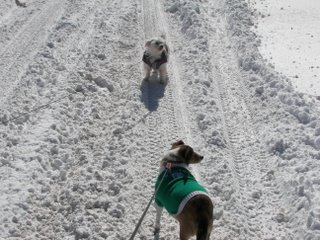 A pair of dogs walking in the snow after the Blizzard of 2007