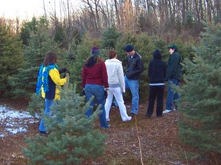 My family hunting the perfect tree