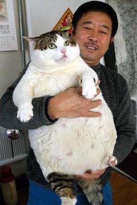 big giant cat found