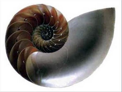 snail shell swirl shape