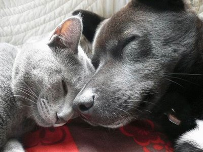 cat and dog sleep together