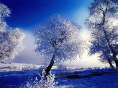 fantastic photo of winter