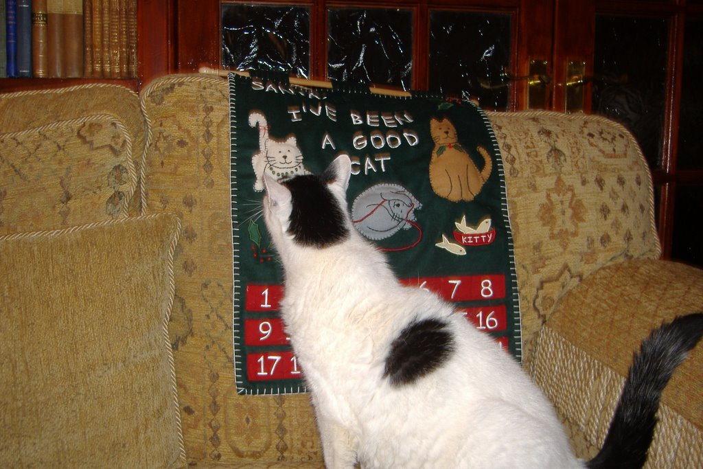 cat christmas countdown 2 - Christmas Names For Cats