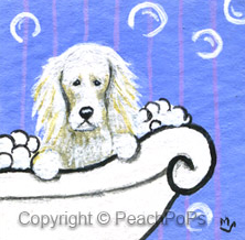 bath time saluki dog