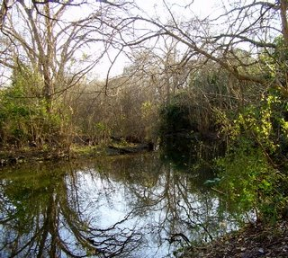 San Marcos wetland scene