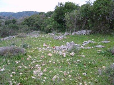 Israel Ofer Carmel