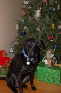 Diesel by the tree