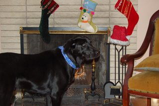 Diesel's stocking was hung by the chimney with care