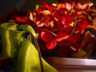 Holiday Hydrangea