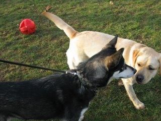Winnie and Chena playing