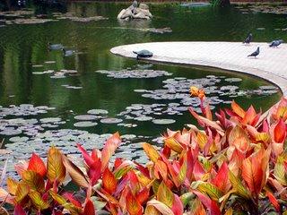 Brisbane Park Lake