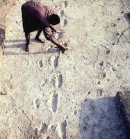 Trackways made by Australopithecus in volcanic ash: about 4 m.y. old