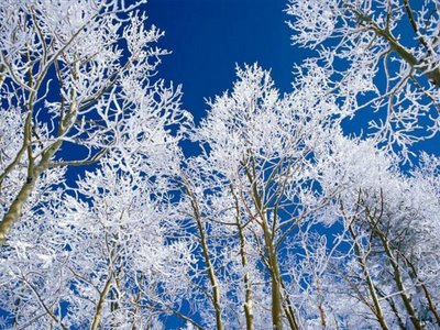 Treetop Beauty