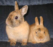 Image of two bunnies