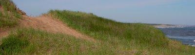 Cavendish sand dunes