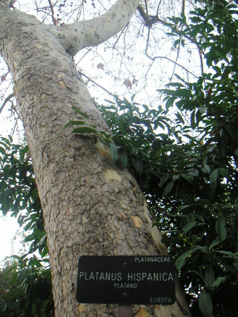 Visital al real jardin botanico servicioadomicilio for Botanico jardin