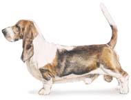 basset Os dez cachorros mais inteligentes e os mais burros   Curiosidades