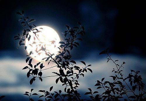 Risultati immagini per vento di notte
